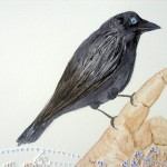 Crow, 2010